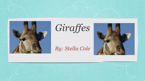 Thumbnail for entry Giraffes: by Stella