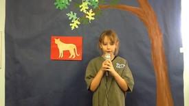 Thumbnail for entry Amelia - Cheetahs