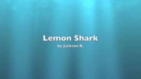 Thumbnail for entry Jackson Lemon Shark