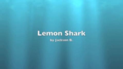 Thumbnail for entry Jackson Lemon Shark