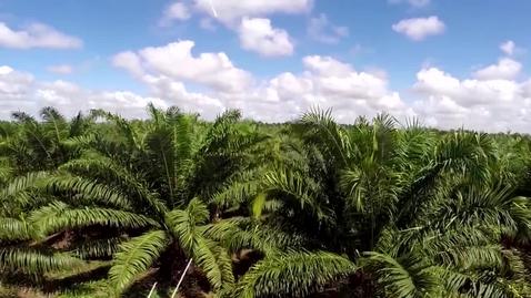 Miniatura para la entrada AGROMSA, Transforma sus suelos para un óptimo desempeño