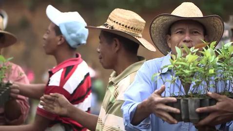 Miniatura para la entrada Promueven reforestación en Jalapa