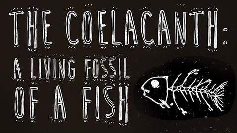 Thumbnail for entry The coelacanth: A living fossil of a fish - Erin Eastwood