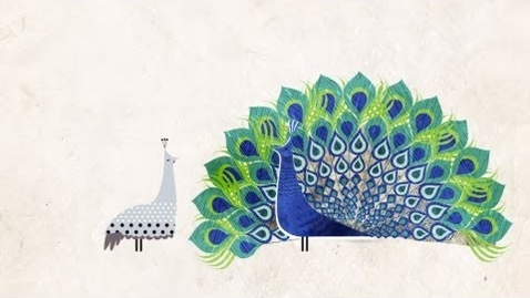 Thumbnail for entry How did feathers evolve? - Carl Zimmer