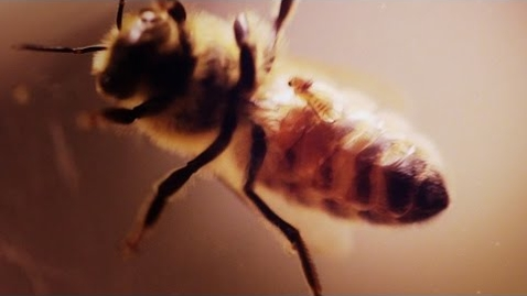 Thumbnail for entry Invasion of the Zombees: A Bee Horror Film