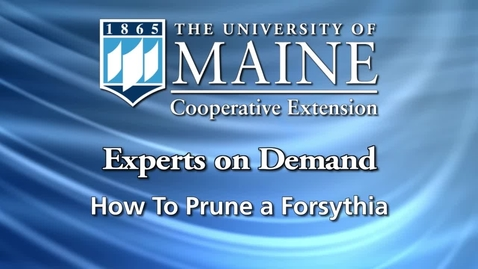 Thumbnail for entry How to Prune Forsythia