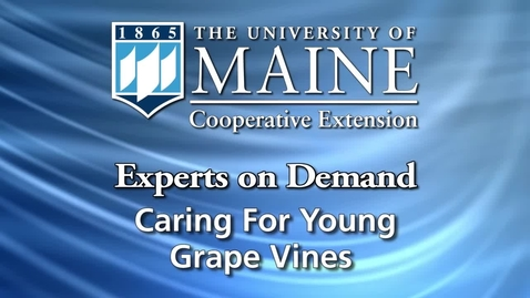 Thumbnail for entry Caring for Young Grape Vines