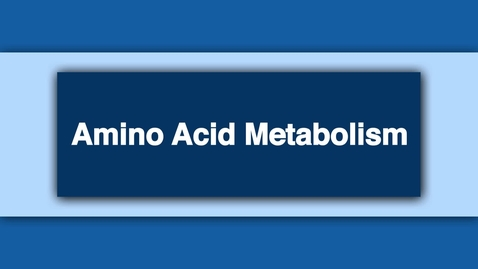 Thumbnail for entry Amino Acid Metabolism