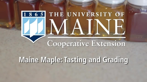 Thumbnail for entry Maple Syrup Grading and Tasting