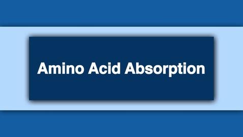 Thumbnail for entry Amino Acid Absorption