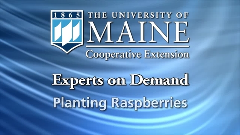 Thumbnail for entry How to Plant Raspberries
