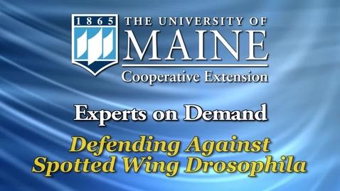 Thumbnail for entry Defending Against Spotted Wing Drosophila