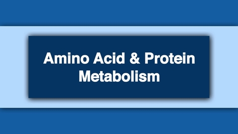 Thumbnail for entry Amino Acid and Protein Metabolism