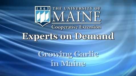 Thumbnail for entry Growing Garlic in Maine