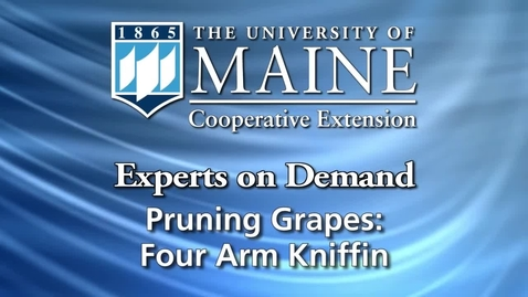 Thumbnail for entry Four Arm Kniffin System for Growing Grapes