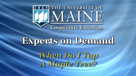 Thumbnail for entry When Do I Tap a Maple Tree?