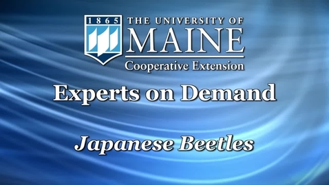 Thumbnail for entry How to Get Rid of Japanese Beetles