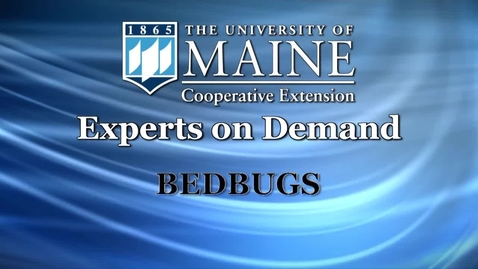 Thumbnail for entry How to Look for and Avoid Bedbugs in Hotel or Motel Rooms