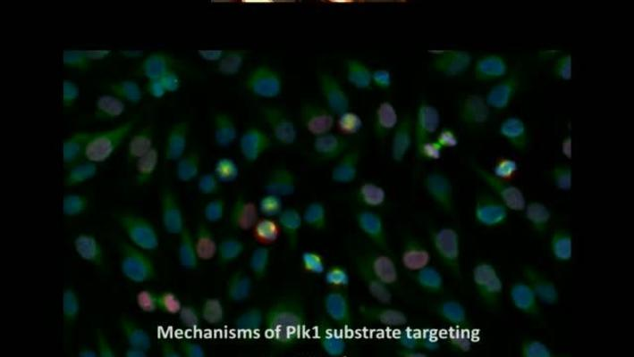 Mechanisms of Polo-like kinase 1 (Plk1) substrate targeting by quantitative proteomics
