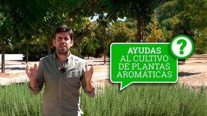 agroclick_cap_20_a_27_ayudas_plantas_aromaticas.