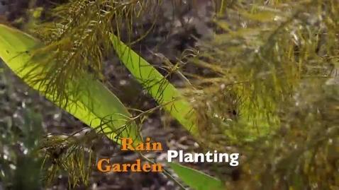Thumbnail for entry Rain Garden Planting