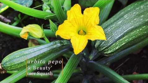 Thumbnail for entry Direct Sowing in Raised Beds