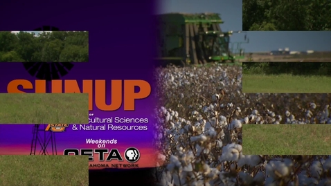 Thumbnail for entry SUNUP: How do you know if there's enough forage in your pasture?