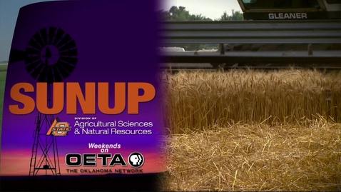 Thumbnail for entry SUNUP: Is Teff for you?