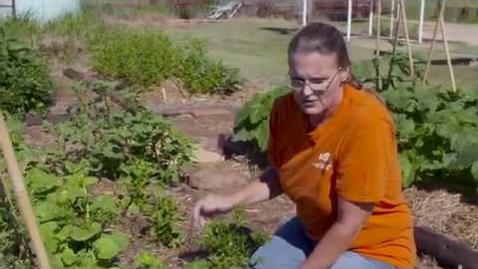 Thumbnail for entry Casey's Vegetable Garden Update