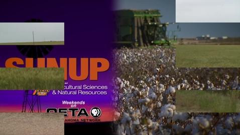 Thumbnail for entry SUNUP: Wheat Tour 2017-Alfalfa County