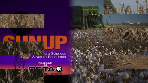 Thumbnail for entry SUNUP: Sorghum research you can use now