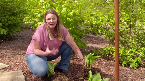 Thumbnail for entry Oklahoma Gardening Episode #4640 (04/04/20)