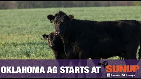 Thumbnail for entry Cow-Calf Corner - Pinkeye (6/6/20)