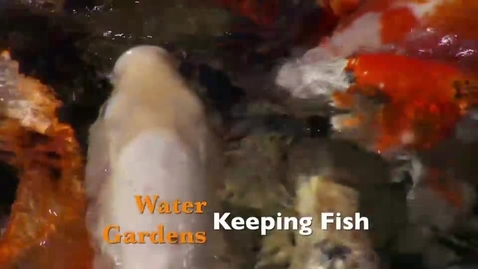 Thumbnail for entry Water Gardens Keeping Fish