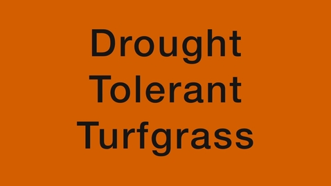 Thumbnail for entry We are Oklahoma: Drought Tolerant Turfgrass Project