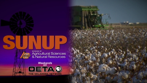 Thumbnail for entry SUNUP: Is Your Soil Ready for Winter Crops?