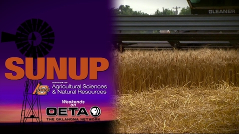 Thumbnail for entry SUNUP: Wheat Pasture Research Update and Bloat Prevention