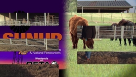 Thumbnail for entry SUNUP: Cow-Calf Corner (12-02-17)