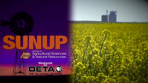 Thumbnail for entry SUNUP: Forage Field Day