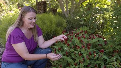 Thumbnail for entry Oklahoma Gardening #4650 (06/13/20)