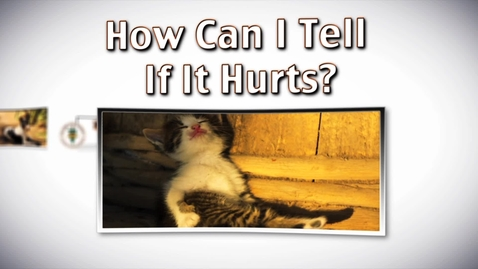 Thumbnail for entry Detecting Pain in Your Pet