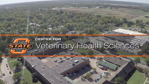 Thumbnail for entry Exploring Kidney Disease