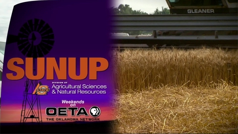 Thumbnail for entry SUNUP: Wheat Tour 2017-Caddo County