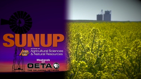 Thumbnail for entry SUNUP: How Canola Cleans Up Weeds