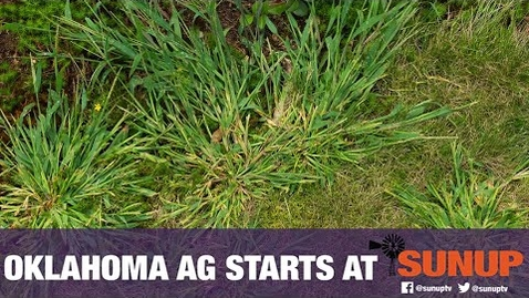 Thumbnail for entry Crabgrass as Forage (5/2/20)