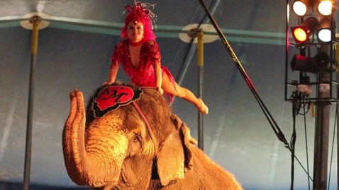 Thumbnail for entry Enterprising Elephants, and Other Circus Customs