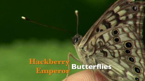 Thumbnail for entry Oklahoma Gardening: Hackberry Emperor Butterflies