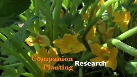 Thumbnail for entry Oklahoma Gardening: Companion Planting Research