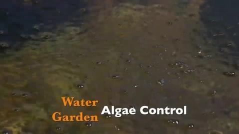 Thumbnail for entry Water Garden Algae Control