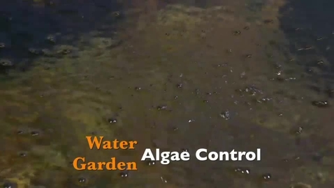 Thumbnail for entry Water Garden Algae Control